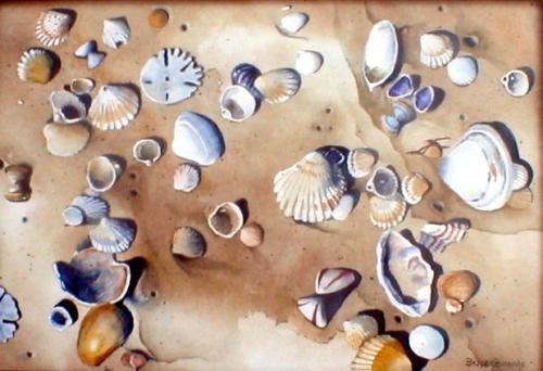 West African Beach Shells